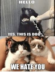 Dog Phone Meme - dog phone meme