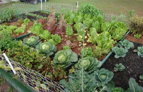 vegetable garden ideas for small yards vegetable garden ideas in your yard margarite gardens