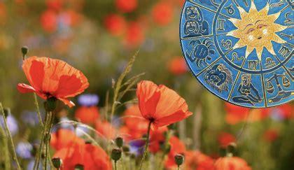 oroscopo dei fiori oroscopo dei fiori qual 232 la pianta capricorno leitv