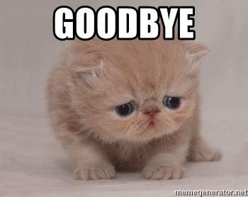 Goodbye Cat Meme - goodbye super sad cat meme generator