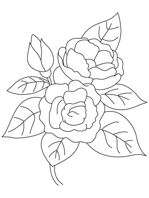 camellia flower coloring page camellia flower coloring pages download and print