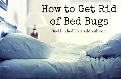 how to get rid if bed bugs one hundred dollars a month