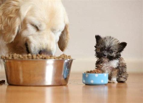 perros pequenos en tamano pero grandes en ternura