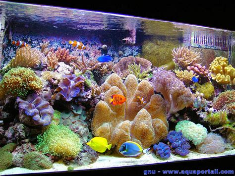 en eau de mer manuel aquarium marin r 233 cifal