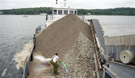 thames river start the day oyster company begins effort to revive long