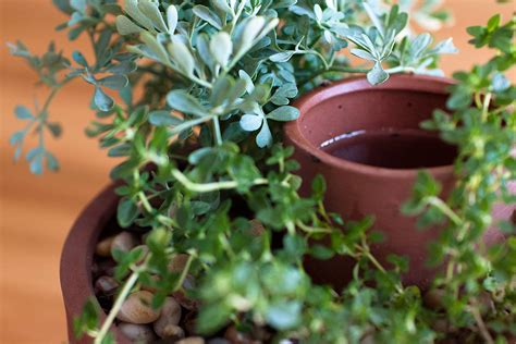 self water planter self watering herb and succulent planter the green head