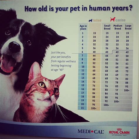 what is years to human years mr will wong toronto entertainment pets how is my cat or in