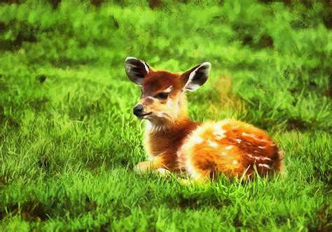 Baby Animal Photos Free Stock Baby Animal Photos Public Domain Images Animals