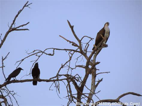 Birds Of The World 365 Days day 072 sunset confrontation 365 days of birds