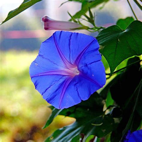 fiori di settembre in edicola dal 23 agosto casa in fiore di settembre cose
