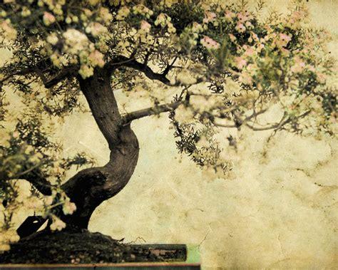 zen wall murals your moment of zen wall mural contemporary wallpaper