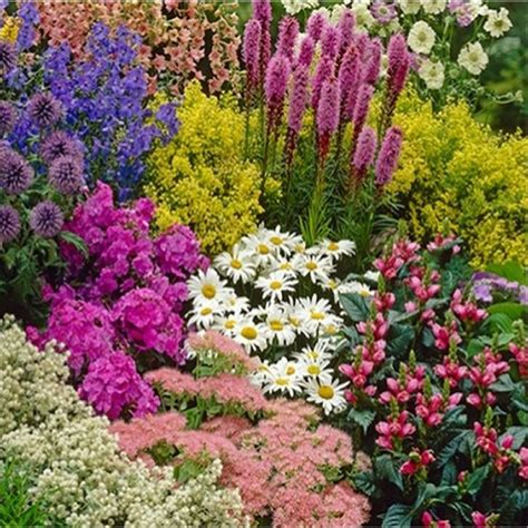 ten xl perennial border plants collection