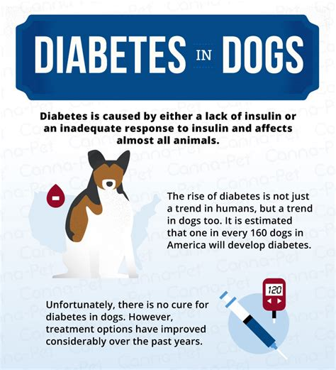 diabetes in puppies diabetes how to care for a diabetic canna pet