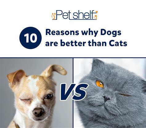 dogs are better than cats 10 reasons why dogs are better than cats