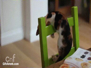cat on chair gif chair fail falling gif find on giphy