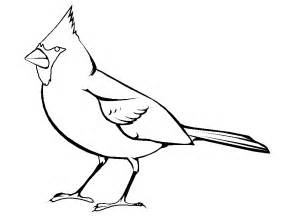 cardinal coloring page cardinal outline clipart best