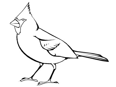 Cardinal Bird Coloring Page cardinal outline clipart best