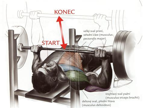 what is a bench press bench press