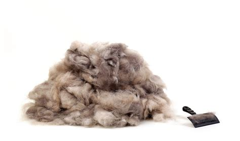 how to stop shedding 5 tips on how to reduce shedding in dogs