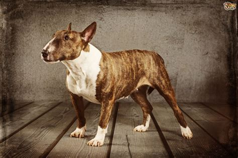 do dogs gallbladders what does the s gall bladder do pets4homes