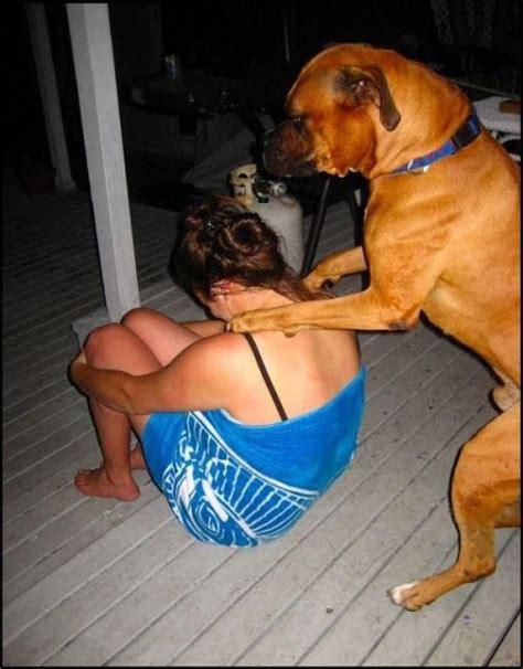 gambar lucu pekerjaan berat untuk anjing peliharaan gambar hidup