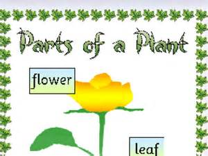 all about plants by amblanch