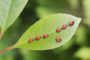 Insect Garden Pests - garden insect pests and what to do about them