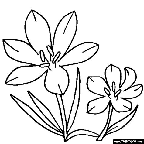 Flower Coloring Pages  Color Flowers Online Page 1 sketch template