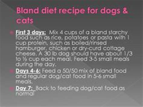 bland diet for puppies 1000 images about bland diet for dogs on bland diet sick and recipes for