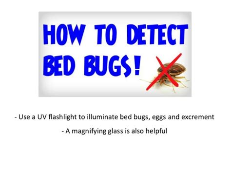 getting rid of bed bugs naturally how to get rid of bed bugs naturally learn how to kill