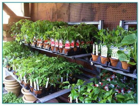 an indoor vegetable garden growing vegetables