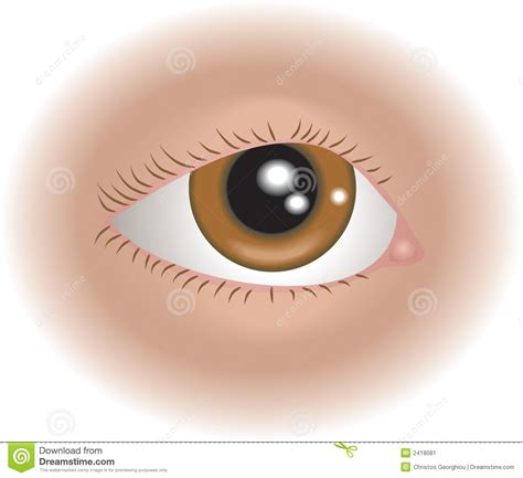 the eye is the l of the body body parts eye stock image image 2418081