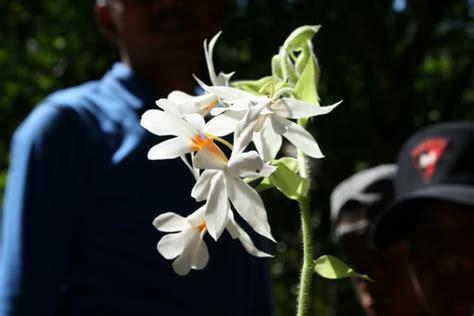 Jenis Jenis Tanaman Anggrek jenis bunga anggrek beserta gambar dan ciri cirinya