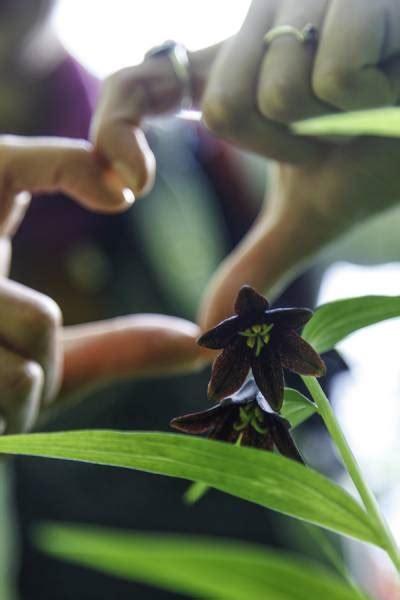 plant lovers photo gallery adventure flow