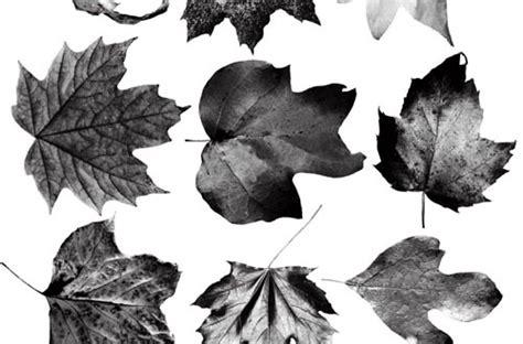 photoshop pattern leaf 20 sets of free leaf brushes for photoshop designbeep