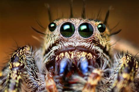 Imagenes De Uñas Asquerosas | 10 заблуждений о пауках последние новости экологии
