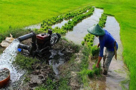 newly developed irrigation maps  south asia presented