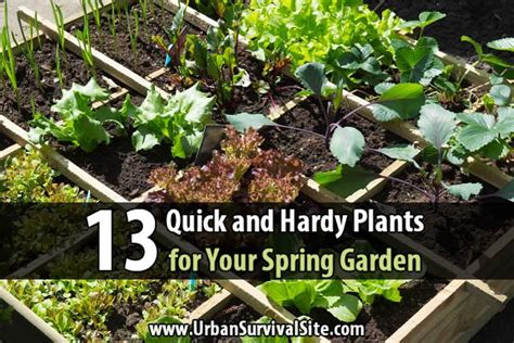 winterharte bepflanzung 13 and hardy plants for your garden bio prepper