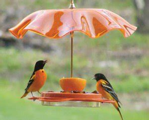 baltimore oriole a quot most wanted quot backyard bird birds