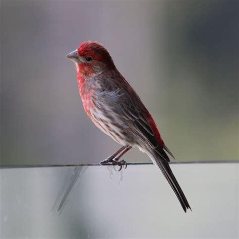 image gallery nh birds