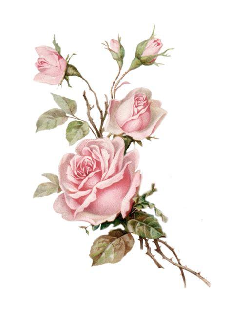 pin  roses