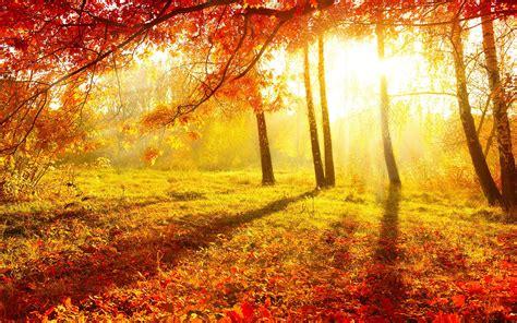 autumn forest background   pixelstalknet