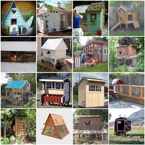 types of backyard chickens different types of backyard chicken coops the poultry guide
