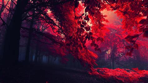 hd red fall leaves wallpaper  nature   red