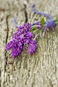 Lavendel Schneiden Und Trocknen lavendel trocknen garden deerns