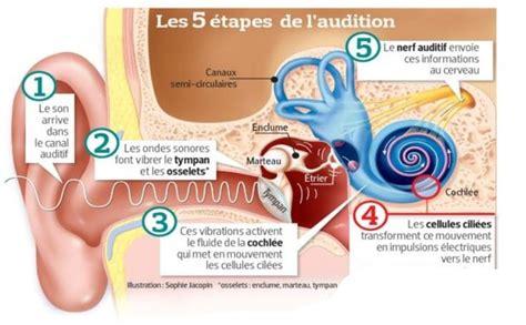 I D Audition by Qu Est Ce Qu Une Perte D Audition Audition Gutleben
