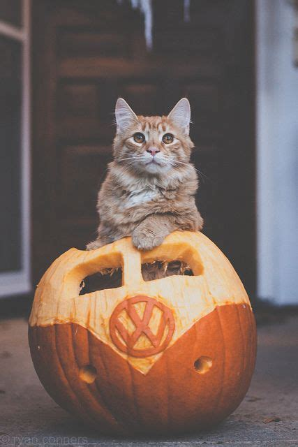 pumpkin spiced cattes