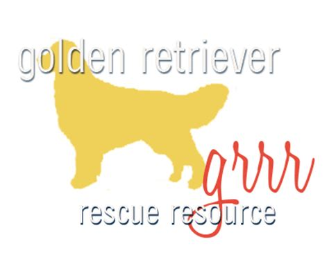 golden retriever jacksonville fl great golden retriever rescue jacksonville fl dogs in our photo