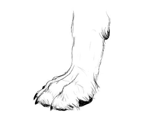 how to draw a paw how to draw animals dogs and wolves and their anatomy