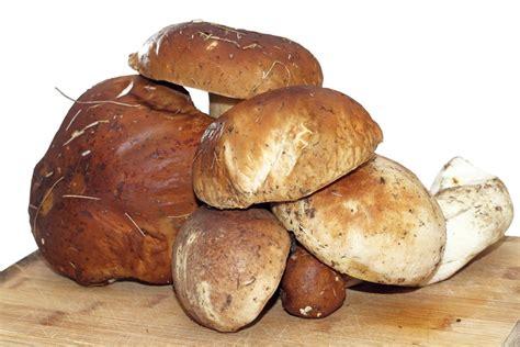 cucinare funghi freschi come cucinare i funghi porcini 5 trucchi per non sbagliare